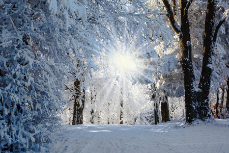 Photo pour Forest glade, covered with snow, sunny Christmas morning - image libre de droit