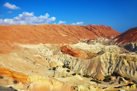 Edge of the canyon are composed of sandstone of various shades of beige and brown colors. At the bottom of the canyon trees. The canyon in the rocky desert near the Dead Sea