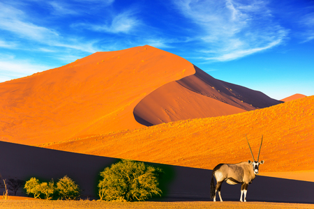 Foto de Namibia, South Africa. Sunset in the desert. Oryx standing at the road. The concept of exotic and extreme tourism - Imagen libre de derechos