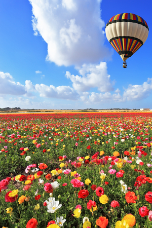Photo pour Spring Day in Israel.  Bright striped balloon flies over a field of colorful garden of buttercups. - image libre de droit
