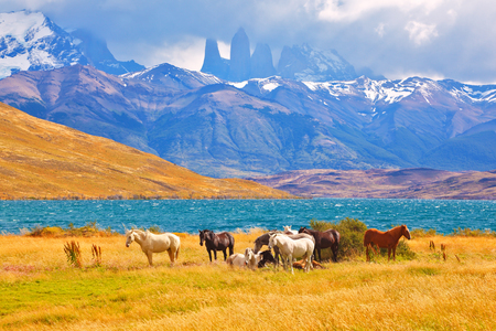 Photo pour Beautiful thoroughbred horse grazing in a meadow near the lake. On the horizon, towering cliffs Torres del Paine - image libre de droit