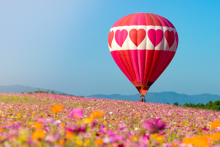 Photo for hot air balloon  in cosmos flower field - Royalty Free Image