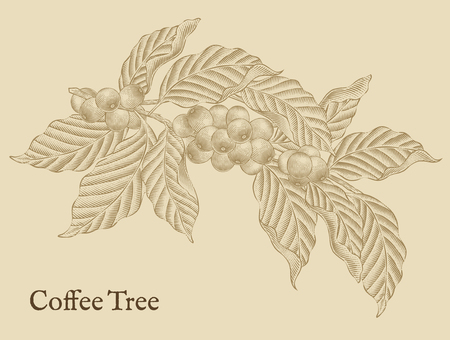 Illustration for Coffee tree elements, retro coffee plants in etching shading style - Royalty Free Image
