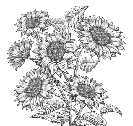 Ilustración de Retro Sunflower elements, attractive sunflowers in etching shading style, black and white tone - Imagen libre de derechos