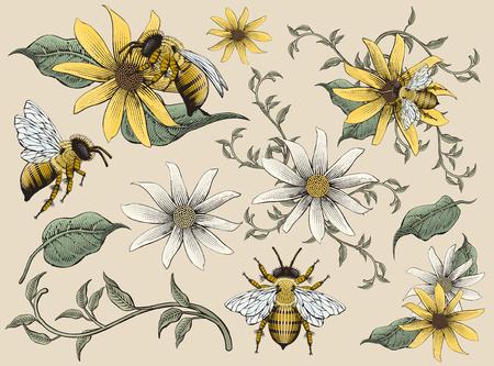 Illustration pour Honey bees and flowers elements vector illustration - image libre de droit