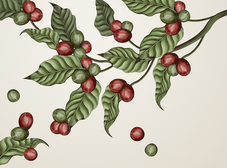 Illustration for Illustration of leaves and coffee cherries in red and green - Royalty Free Image