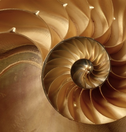 Photo for Natural texture of shell  Nautilus swirl background  - Royalty Free Image