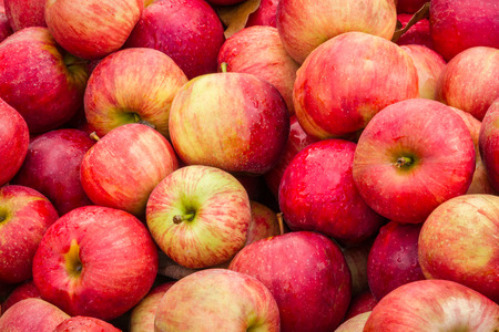 Photo for Apples fill a bin at an orchard market at harvest time. - Royalty Free Image