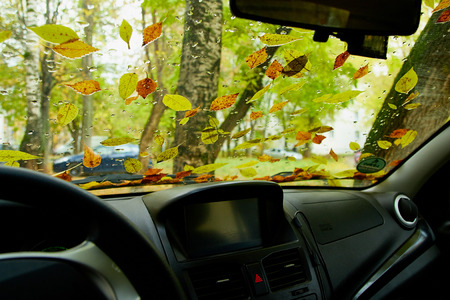 Photo pour Leaves on the windshield of the car in the autumn day and tree background - image libre de droit