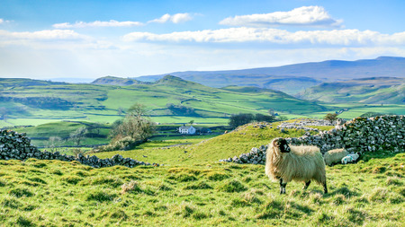 Photo pour Beautiful yorkshire dales landscape stunning scenery england tourism uk green rolling hills sheep - image libre de droit
