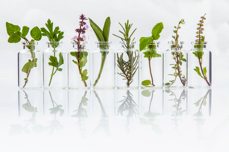 Photo for Bottle of essential oil with herb holy basil leaf, rosemary,oregano, sage,basil and mint on white background. - Royalty Free Image