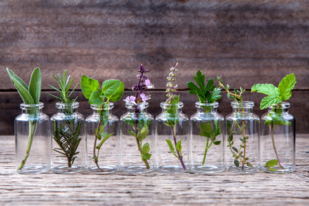 Foto per Bottle of essential oil with herbs holy basil flower, basil flower,rosemary,oregano, sage,parsley ,thyme and mint set up on old wooden background . - Immagine Royalty Free