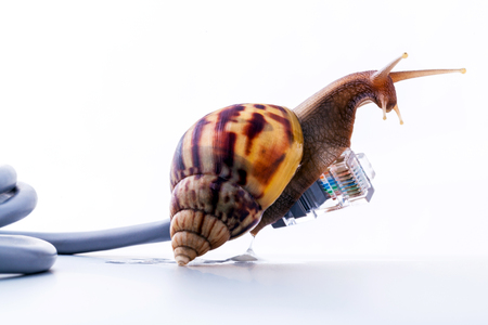 Photo pour Snail with rj45 connector symbolic photo for slow internet connection. broadband connection is not available everywhere. - image libre de droit