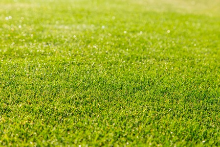 Foto de green grass texture for background - Imagen libre de derechos