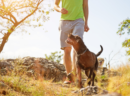 Photo pour Young man with his dog walking outdoor during summer day. - image libre de droit