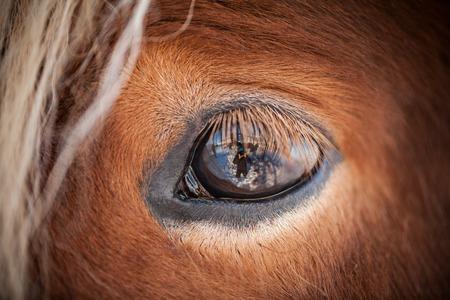Foto de Horses in the mountains in Iceland - Imagen libre de derechos