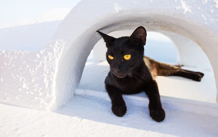 Foto de Close-up of cat on Santorini island, Greece, Europe. - Imagen libre de derechos