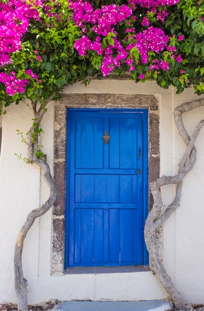 Photo for Beautiful blooming bougenvilia with traditional old blue door in old village Emporio on the island of Santorini in Greece. - Royalty Free Image