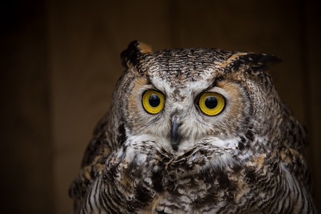 Photo for Eagle Owl is sitting on the tree stump. - Royalty Free Image