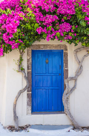 Photo pour Beautiful blooming bougenvilia in old village Emporio on the island of Santorini in Greece. - image libre de droit