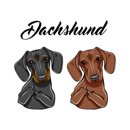 Illustrazione per Brown and black Dachshunds with middle fingers. - Immagini Royalty Free