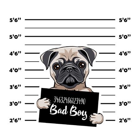 Illustration pour Pug prisoner. Arrest photo. Police placard, Police mugshot, lineup. Police department banner. Dog criminal. Pug offender Vector illustration - image libre de droit