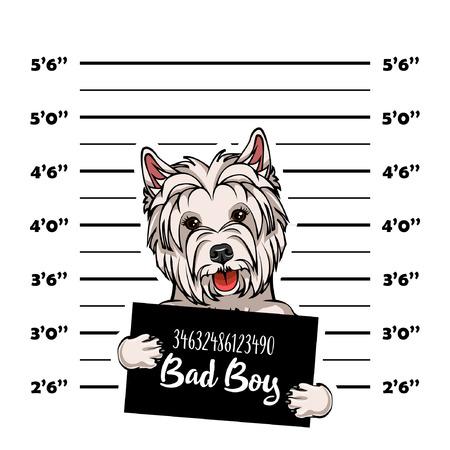 Ilustración de West Highland Terrier mugshot dog. Police banner. Arrest photo. Police placard, Police mugshot, lineup. Police department banner. Dog criminal. Dog offender. Vector illustration - Imagen libre de derechos
