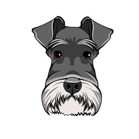 Illustration pour Schnauzer Dog Portrait. Dog head, face, muzzle. Dog breed Vector illustration - image libre de droit