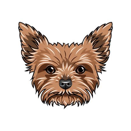 Ilustración de Yorkshire terrier dog portrait. Dog face, head, muzzle. Yorkshire terrier breed. Vector illustration. - Imagen libre de derechos