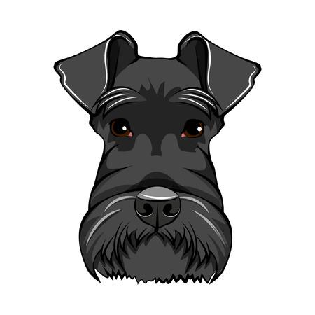 Illustration pour Schnauzer dog face. Schnauzer portrait. Dog head. Schnauzer dog breed. Vector illustration. - image libre de droit