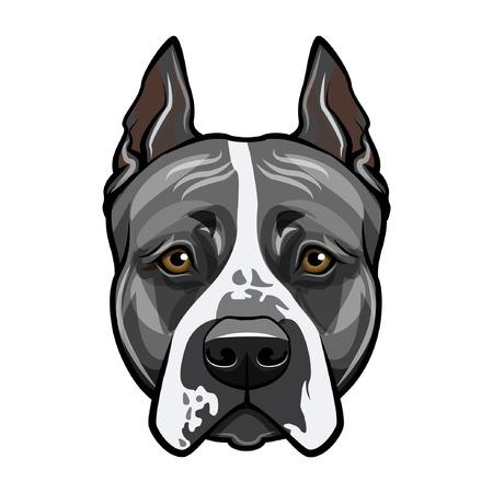 Illustrazione per American staffordshire terrier head face. Dog portrait. Vector illustration. - Immagini Royalty Free