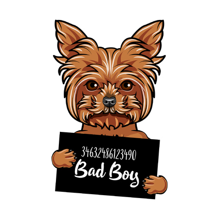 Illustrazione per Yorkshire Terrier dog bad boy vector illustration. - Immagini Royalty Free