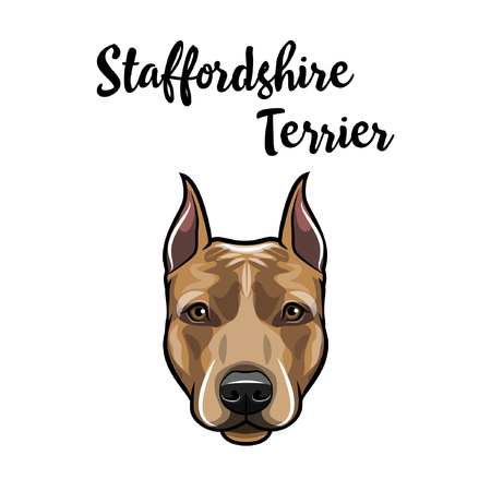 Ilustración de Staffordshire Terrier portrait. Dog head. American Staffordshire Terrier breed. Dog face, muzzle. Vector illustration. - Imagen libre de derechos
