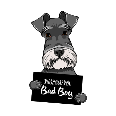 Illustrazione per Schnauzer Dog bad boy. Arrest photo. Police placard. Dog criminal. Schnauzer prisoner. Vector illustration. - Immagini Royalty Free