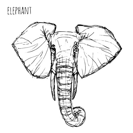 Wild animal . Black and white elephant face drawn pen and ink on a white background Vector  illustration