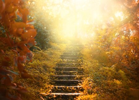 Photo pour Autumn background, stairs to the sky. amazing mysterious road steps leads to mystical world, fairytale path hides among yellow and orange trees, magical October in foggy forest, beauty of nature - image libre de droit