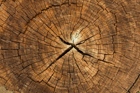 Photo for Dark brown tree trunk texture or background - Royalty Free Image