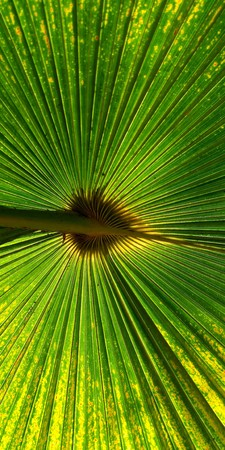 Foto de Green fan palm leaf for background texture - Imagen libre de derechos