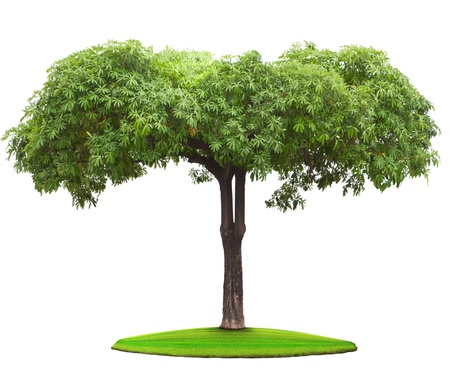 tree plant on green field