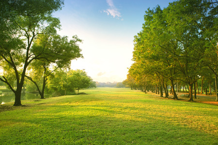Foto de beautiful morning light in public park with green grass field and green fresh tree plant perspective to copy space for multipurpose - Imagen libre de derechos