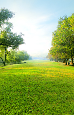 Foto de beautiful morning light in public park with green grass field and green fresh tree plant perspective to copy space for multipurpose vertical form - Imagen libre de derechos