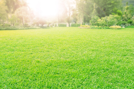 Foto de vibrant of playground,meadow ,green grass field - Imagen libre de derechos