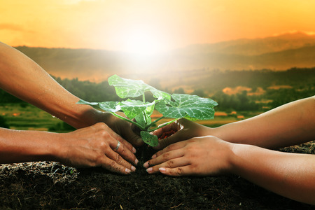 Photo pour human hand planting young plant together on dirt soil against beautiful sun light in plantation field - image libre de droit