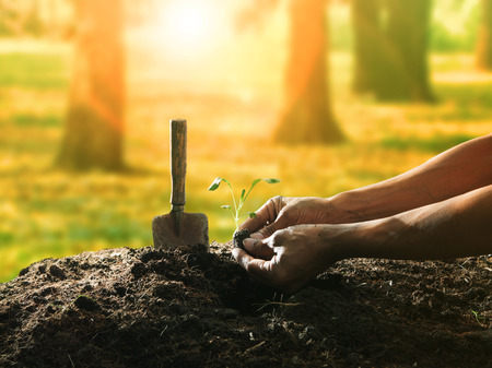 Photo pour conceptual of hand planting tree seed on dirty soil against beautiful sun light in plantation field use for human activities and future growthing - image libre de droit