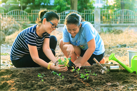 Foto de mother and young daughter planting vegetable in home garden field use for people family and single mom relax outdoor activities - Imagen libre de derechos