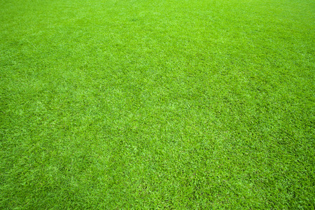 Foto de pattern of green grass field use as background,backdrop,natural texture - Imagen libre de derechos