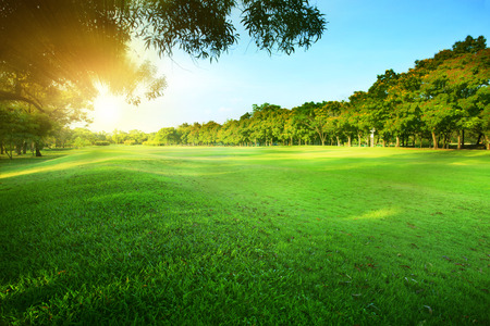 Photo pour beautiful morning sun shining light in public park with green grass field and green fresh tree plant perspective use as  copy space and natural background,backdrop - image libre de droit