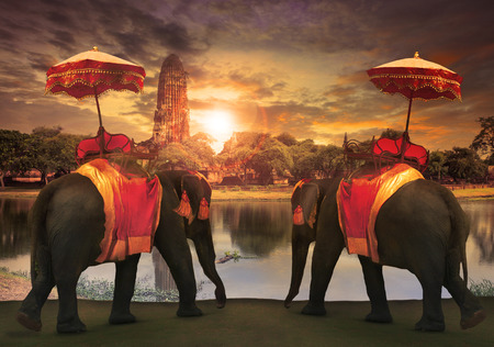 Photo for elephant dressing with thai kingdom tradition accessories standing in front of old pagoda in Ayuthaya world heritage site use for tourism and multipurpose background , backdrop - Royalty Free Image