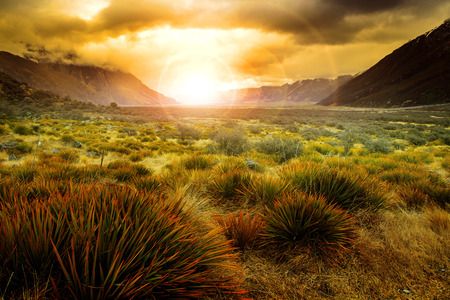 Foto de sun rising behind grass field in open country of new zealand scenery use as beautiful natural background - Imagen libre de derechos