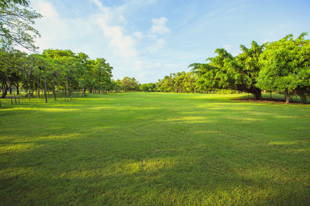 Foto de morning light in public park and green grass garden field ,tree and plant use as natural background - Imagen libre de derechos